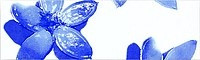 Majolika Nimfea 15 Wandbordüre 200x61 mm